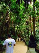 ※aoshima jungle