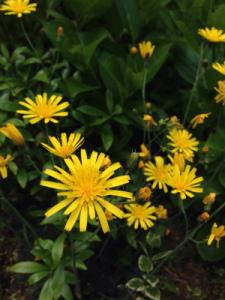 きいろのお花