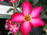 s-タイお花