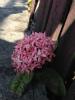 s-花。ピンク2